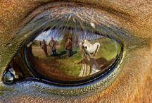 Horses - Atlar