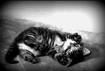 chats du monde et d'ailleurs