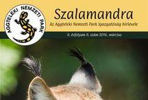 Szalamandra hírlevél / 2015-től megújul hírlveleünk.  Programajánló Érdekességek Akciók Hírmorzsák Gyereksarok