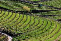 Paesaggi Valle di Cembra - Villa Corniole / I più bei paesaggi della Valle di Cembra