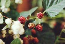 Цветочный домик Ginza / Цветочный домик Ginza. Это место для истинных ценителей настоящей природной красоты и изящества. В Цветочном домике Ginza по вашему заказу флористы выполнят букеты на любой вкус. Санкт-Петербург, Караванная ул., 12 www.ginzaflower.ru