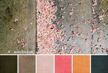 Colourspiration