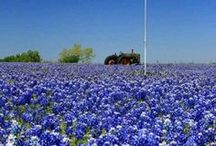 For the Love of Texas / All things Texas where our two law offices are located.  11767 Katy Freeway Suite #740 in Houston and 918 Austin Street in Hempstead.  281-597-8818 or 979-826-8484.  We practice law in all 50 states. #TopHoustonLawyer #HoustonDUIAttorney