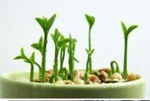 plants gardening