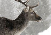 •Deer• / by № 365