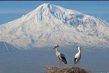 Armenian Land
