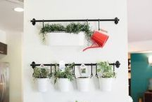 Indoor Apartment Garden / Growing herbs and vegetables for your indoor apartment garden. Houseplants, decorations and flowers for small spaces.Terrarium ideas and DIY projects!