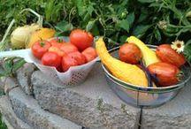 The Garden, Garden Photography