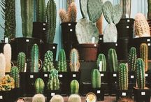 Succulents + Cacti ʕ•ᴥ•ʔ