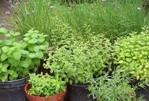 Beginner's Herb Garden