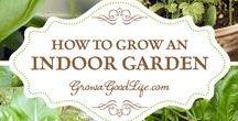 Grow your own veg, herbs & fruits