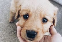 Puppers / Adorable pets and animals.