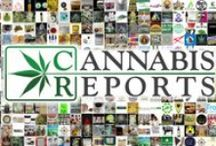 Cannabis Reports In The News