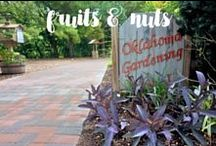 Videos | Fruits and Nuts / Here are some helpful videos from Oklahoma Gardening that cover planting fruit and general fruit maintenance. Also features videos for the maintenance and harvesting of pecans and peanuts.