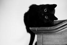 kittens//