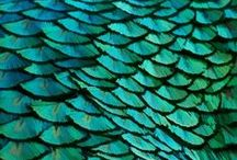 Tantalizing Teal / Inspiring ways to work teal into your fall fashion wardrobe. This beautiful blue green color can be found in a peacock's feather, butterfly wings, the moonlit ocean, and Fall 2015 runways.