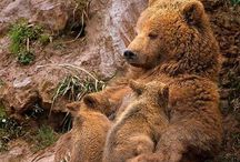 Bears, beautiful bears / Erm... Bears. Just.... Bears