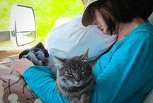 Traveling with Pets / We believe in helping our furry and feathered friends through volunteerism, donation, and how we live our lives.   We adopted Lexi the Travel Kitty in 2015 and we'll share some of the things we've learned about traveling with pets. We'll also share stories of others who do so, plus some great travel-friendly pet products.