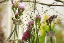 Botanicals / by Hannah VanderHart