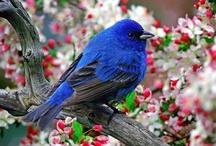 BIRDS ~ BLUE / by Sue Dewland