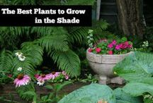 GARDEN - In the SHADE / Plants that thrive and grow in shady areas of your yard :) / by Michelle Eliason