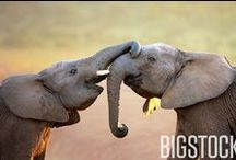 Elephant Images You'll Never Forget / #ELEPHANTS ARE JUST LIKE US