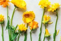 ALL ABOUT CALENDULA / #Calendula is a powerful & beautiful flower that we're absolutely devoted to. It's great for skin care among many other things!