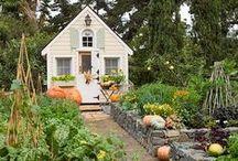 GARDENING / #Organic #Gardening #SoilToSkin #Herbs #Veggies #Flowers #Compost #CompanionPlanting #Calendula