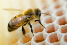 SAVE THE BEES / Bees and other pollinators literally make the world go 'round- we've all got to do our part to save them.