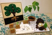 Biology Montessori Materials / Montessori and montessori-inspired activities and printables that cover Botany and Zoology areas