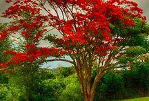 Nature forever...°✿⊱╮° / As mais belas paisagens