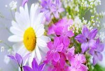 ::Lovely flowers °✿⊱╮°
