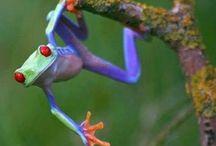 Costa Rica / by Gloria Tucker