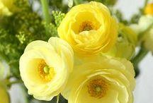 ::Lovely flowers II °✿⊱╮°