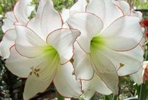 ::White blooming°✿⊱╮° / Somente flores brancas