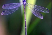 Dragonflies & Butterflies / by D. T. D'Amore