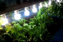 Aquaponic / Aquaponic - The combination of aquaculture and hydroponics