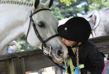 Oh horses / by Rachel Schneider