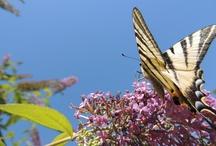 Dehors : Papillons