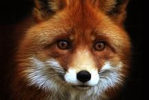Animal Medicine/Totems