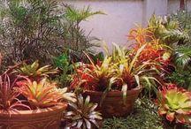 Garden and plants / Garden ideas