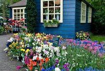 Gardening / by Kim Worden-Hartig
