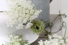 Flowers / Ideas for arrangements and colours