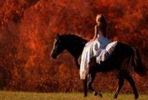 fall horse photoshoot