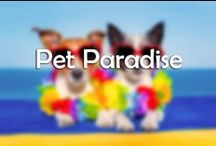 Pet Paradise / Make your new pet feel right at home!