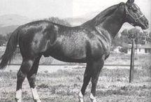 Quarter horse legends