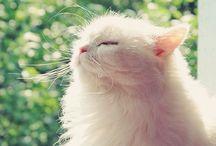 Cats (=^・^=) Kittens / by Yumiko Hattori
