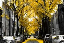 Yellow Inspirations / Decorating in your favourite colours