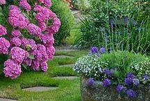 Garden/  Flowers