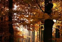 Brown autumn